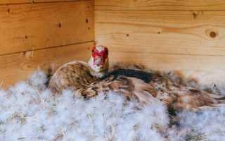 Как сделать гнездо для уток