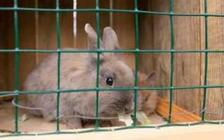 Как самостоятельно сделать клетку для декоративного кролика