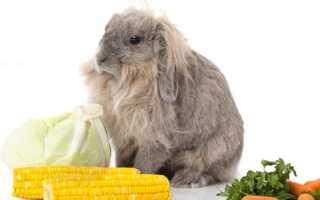 Как вводить в рацион кроликов кукурузу и можно ли давать листья, початки
