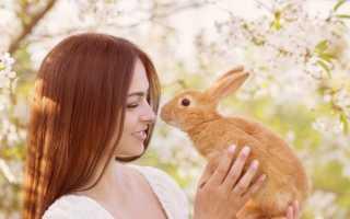 Как выбрать имя для кролика