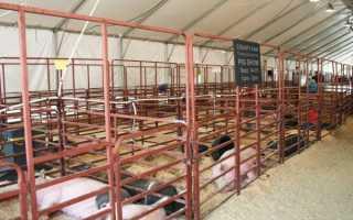 Самостоятельный монтаж щелевых полов для свинарников
