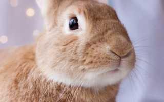 Основные болезни глаз у кроликов и их лечение
