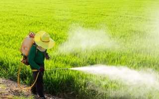 Защита и уход за овощными культурами