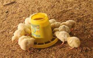 Как сделать кормушку для цыплят