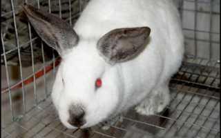 Популярные породы кроликов для домашнего разведения