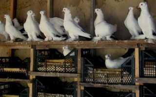 Как сделать гнездо для голубей