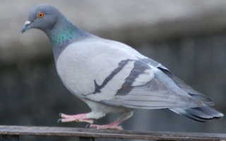Устройство отпугивателя голубей