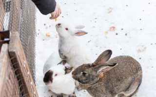 Чем можно кормить кроликов зимой