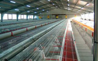Рекомендации по строительству кроличьей фермы