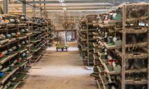 Рентабельность перепелиной фермы