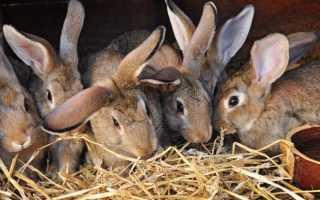 Время выхода маленьких крольчат из гнезда