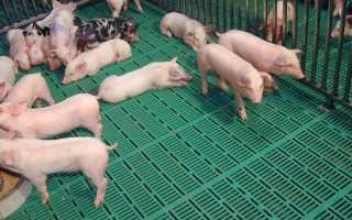 Особенности устройства пола для свиней