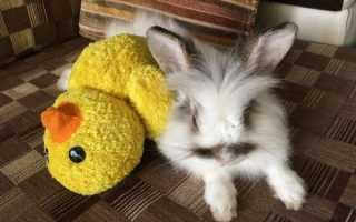 Какую выбрать игрушку для кроликов
