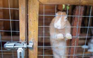 Устройство промышленных клеток для кроликов