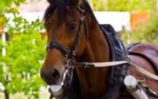 Виды упряжи для лошадей