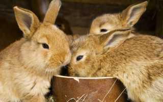 Какими фруктами и овощами можно кормить кроликов