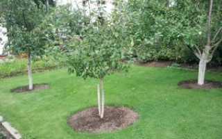 Плодовые деревья и кустарники в саду: схема посадки, как правильно расположить растения в саду, фото