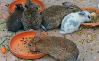 Уход за крольчатами в период роста и развития