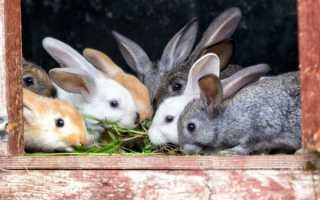 Какую траву можно давать кроликам, а какую нет