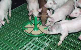 Как сделать своими руками кормушки для свиней