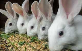 Чем нужно кормить крольчиху после окрола