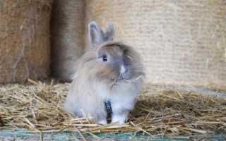 Можно ли дать кроликам лебеду