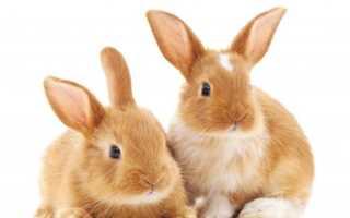 Правильный уход за кроликами в домашних условиях