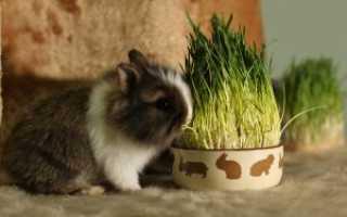 Сколько обычно живут декоративные кролики