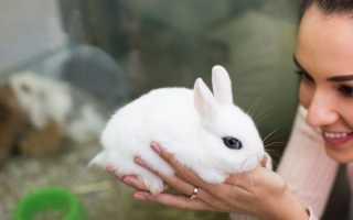 Чем кормить и что можно есть декоративному кролику
