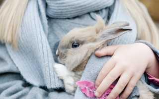 Эффективность Соликокса для кроликов