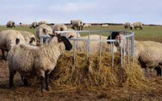 Как сделать кормушку для овец
