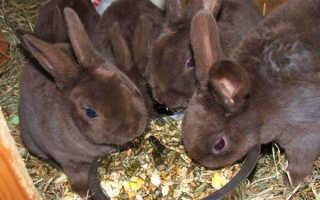 В каком возрасте можно отсаживать крольчат от мамы крольчихи