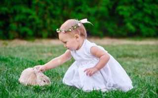 Аллергия на домашних кроликов у ребенка