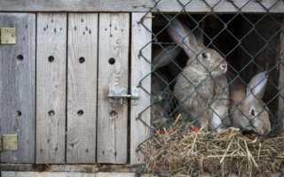 Что делать если кролик грызет деревянную клетку