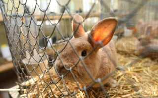 Как сделать клетки для кроликов из сетки