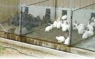 Как сделать вольер для кроликов