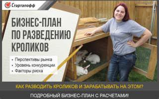 Бизнес-план по разведению и выращиванию кроликов
