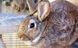 Почему возникает понос у кроликов