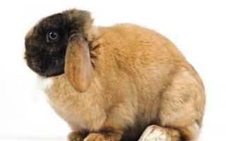 Польза и вред кроличьего жира