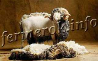 Разновидности ножниц для стрижки овец