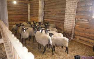 Уход за овцами в зимний период